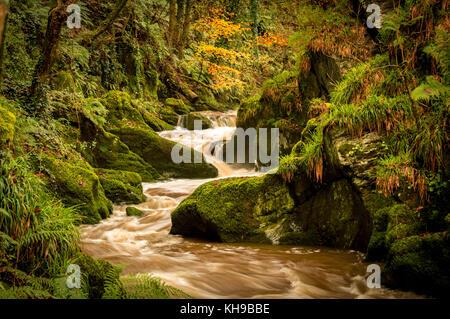 Im Herbst Farbe von West Wales in allen es Herrlichkeit, schöne Spaziergänge entlang des Flusses ceri bringt Sie - Stockfoto
