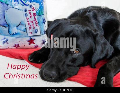 Ein schwarzer Labrador liegt neben einem Weihnachtsgeschenk von Santa mit seinem Namen gekennzeichnet sind. - Stockfoto