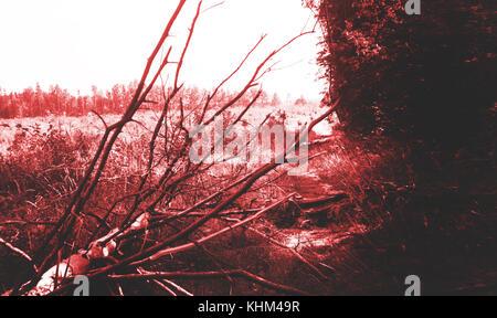 Schaurig dunklen Hintergrund, unheimlichen Wald in Rot Blut, Alptraum - Stockfoto