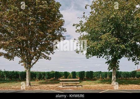 Parkbank vor Weinberg, Bergerac, Aquitanien, Frankreich - Stockfoto