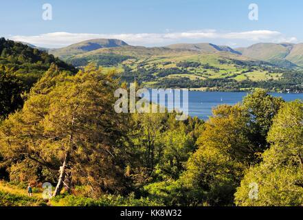 Nationalpark Lake District, Cumbria, England. Suche n. um die troutbeck Fells. Frau Spaziergänge entlang woodland - Stockfoto