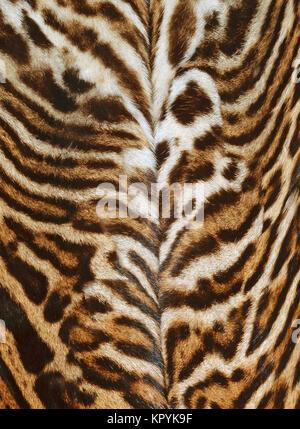 Leopard Textur Hintergrund - Stockfoto