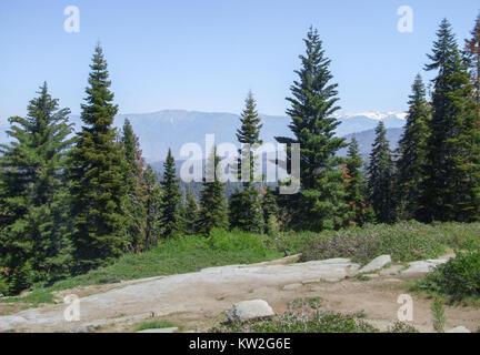 Landschaft am Sequoia und Kings Canyon Nationalpark mit Tannen in Kalifornien, USA - Stockfoto