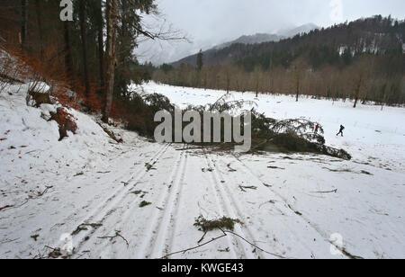 Oberstdorf, Deutschland. 03 Jan, 2018. Bäume haben auf Ski Trail bei stürmischem Wetter auf der FIS Tour de Ski - Stockfoto