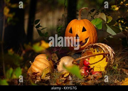 Halloween Kürbis im Wald auf einem dunklen Hintergrund. - Stockfoto