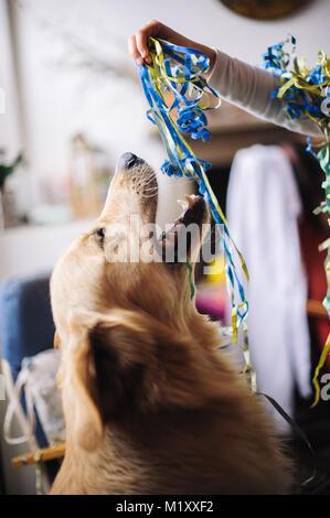 Kleines Mädchen mit Luftschlangen um den Hals und Kopf für die Faschingsfeier in Ihrem Haus spielt mit ihrem Golden - Stockfoto