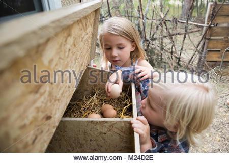Neugierig, blond Bruder und Schwester sammeln frische Eier an coup - Stockfoto