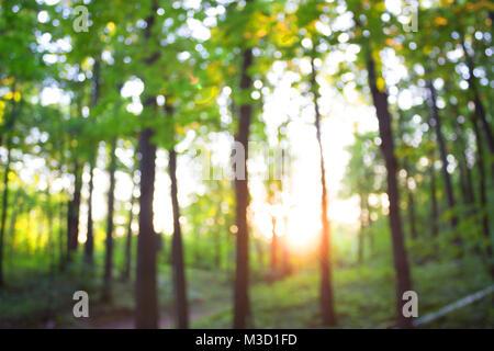 Wald blur baground. Bild von Sommer Wald und Sun - Stockfoto
