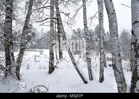 Blick durch weiße Bäume, es schneit auf der weißen Pfad im Winter Wonderland in Deutschland - Stockfoto