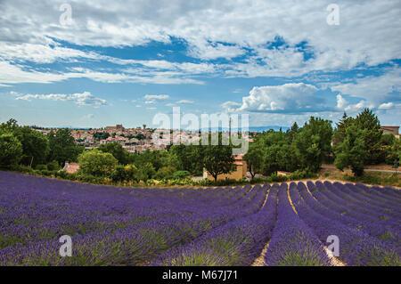 Panoramablick auf lavendelfelder unter sonnigen blauen Himmel und dem Plateau de Valensole Stadt im Hintergrund. - Stockfoto