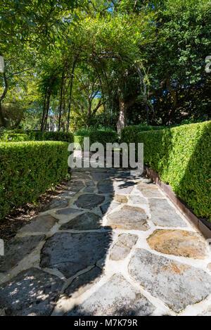 Ein Buxus sempervirins (Common box) Hedge grenzt an einen Sandstein gepflasterter Weg in einem Sydney Garten. - Stockfoto