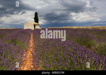 Schönes traditionelles Haus in Lavendel Feld in der Nähe von Valensole, Provence-Alpes-Cote d'Azur, Frankreich - Stockfoto