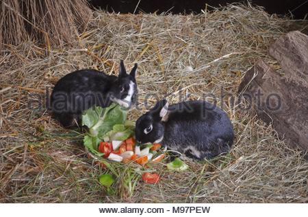 Zwei kleine Hasen essen Gemüse - Stockfoto