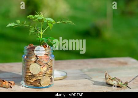 Ein Baum sprießen in einem Glas mit Euro Münzen auf einen Holztisch mit trockenen Blättern außen befüllt. - Stockfoto