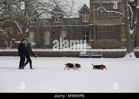 Im späten Winter Schnee decken die Stadt Salisbury, der nur die Domstadt in die Landschaft von England, der Grafschaft Wiltshire, Vereinigtes Königreich - Stockfoto