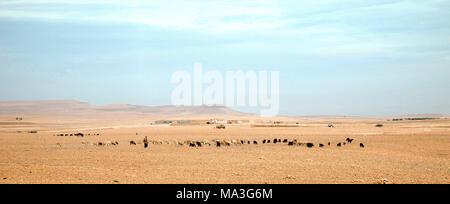 Schafe, der Landwirtschaft, der Hirten, Marokko - Stockfoto