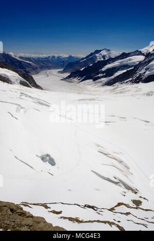Die jungfraufirn Gletscher im Vordergrund, mit winzigen Figuren in der Nähe von riesigen gletscherspalten, in Richtung Konkordiaplatz, Berner Oberland, Schweiz - Stockfoto