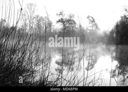 Hintergrundbeleuchtung in einem Feld mit dem morgendlichen Nebel, bei Sonnenaufgang, in der Nähe eines Flusses, märchenhafte, geheimnisvolle Atmosphäre - Stockfoto