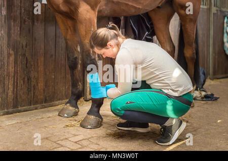 Eine junge Frau wird das Hocken auf dem stabilen Boden. Sie verbindet die Beine von Ihrem Pferd mit Bandagen. Der Reiter schützt das Pferd die Beine ihrer Hannoveraner. - Stockfoto