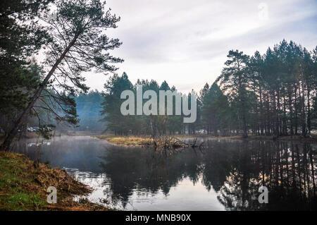 Geheimnisvolle morgen mal im Wald - Stockfoto