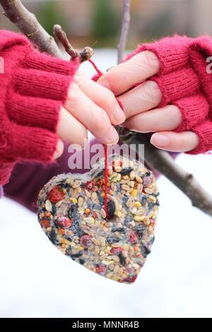 Schritt für Schritt 6/7: Winter berry Futterhäuschen mit ausstechformen. Hausgemachte Herz und sternförmigen Futterhäuschen hängen von Ast - Winter UK - Stockfoto