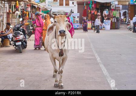Kuh in der Mitte der Market Street an einem heißen Tag in Pushkar, Indien. - Stockfoto