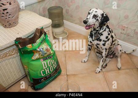 Dalmatiner Hund warten, von Hundefutter Beutel für einige ein, um sie zu Füttern. Herr © Myrleen Pearson. Ferguson Cate - Stockfoto