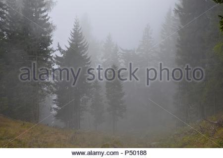 Neblige Landschaft im Wald im Elbsandsteingebirge nahe Dresden, Berge, Koniferen, Bäume, Landschaft, dunkle, gruselige Atmosphäre, - Stockfoto