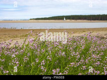 Aussicht über Strand, Dünen und der Lagune, grüne Gras und schönen rosa Blumen, in der Nähe - Stockfoto