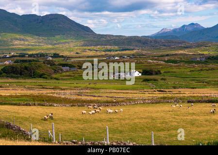 Schäferei auf der atlantischen Küste Irlands im County Mayo, in der Nähe von Westport und Louisberg - Stockfoto