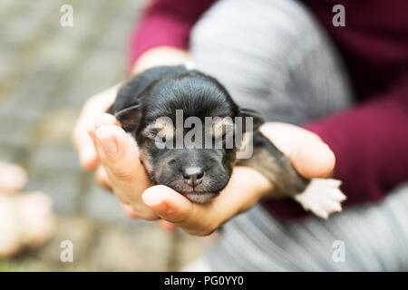 Neugeborene blinder hunde Welpen - Stockfoto