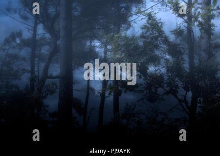 Neblig und dunklem Holz in der Nacht oder Dämmerung gegen einen bewölkten Himmel - Stockfoto