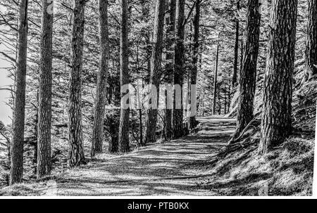 Herbst Wald mit Kies Straße durch eine Gasse von Bäumen in die Bergwelt der Schweizer Alpen, die im Herbst in Schwarz und Weiß - Stockfoto
