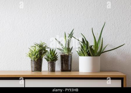 Modernes Wohnen, saftig im Topf, Einmachglas auf Sideboard - Stockfoto