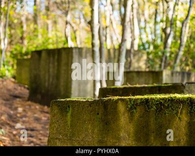 Überreste des Zweiten Weltkriegs konkrete Anti Tank Blöcke auf East Lothian Küste von Wald überwachsen, tyninghame Immobilien, Schottland, Großbritannien - Stockfoto