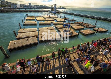 San Francisco, Kalifornien, USA - 14. August 2016: Luftaufnahme der touristischen Gruppe finden Sie in der beliebten Seelöwen auf Plattformen von Pier 39, Fisherman's Wharf. American Travel in San Francisco. - Stockfoto