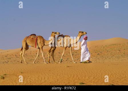 Muscat, Frankreich. 25 Nov, 2012. Ein Beduine geht mit zwei Kamelen durch die Wahiba Sands Wüste im Oman. Streng genommen sind die Tiere Dromedare, die, im Gegensatz zu den beiden-Humped Kamele, nur einen Buckel haben. | Verwendung der weltweiten Kredit: dpa/Alamy leben Nachrichten - Stockfoto