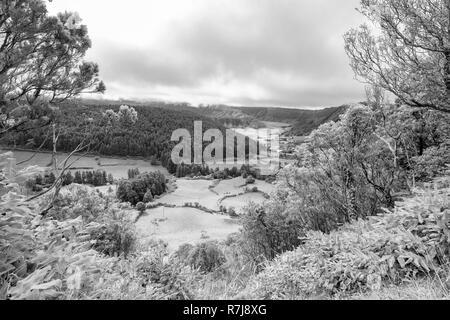 Schwarze und weiße Blick auf die Bäume hinauf die Seite des Alferes Caldera in Sao Miguel. - Stockfoto