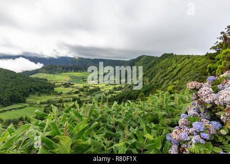 Blaue Hortensien und üppigen Pflanzen mit der Seca Caldera in der Ferne auf Sao Miguel auf den Azoren. - Stockfoto