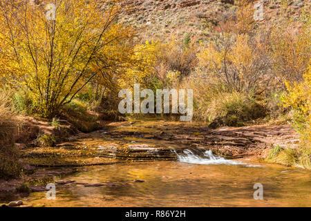 Eine kleine Wasserfälle mit vielen Herbst Farbe in den Stream in Grandstaff Canyon in der Nähe von Moab, Utah - Stockfoto