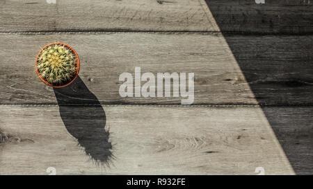 Tischplatte, Ansicht mit kleinen Kaktus im Topf und grau Holz Schreibtisch, Morgen Sonne werfen lange Schatten. Platz für Text auf der rechten Seite. - Stockfoto