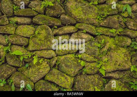 Textur des alten steinernen Wand bedeckte Moos im Fort Rotterdam, Makassar - Indonesien - Stockfoto