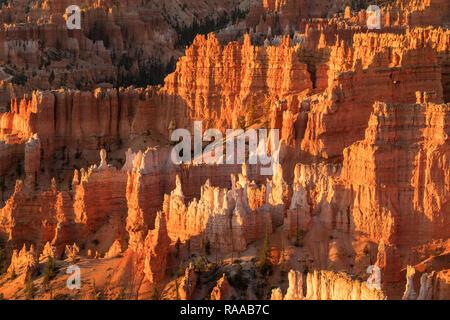 Bryce Canyon National Park, Utah, USA. Bryce Amphitheater mit Erodieren Canyon Wände und Felsformationen bekannt als Flossen und Hoodoos. - Stockfoto