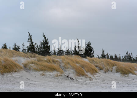 Ein eisiger Wind fegt über eine Düne an der Ostsee. Im Hintergrund sind Nadelbäume. - Stockfoto