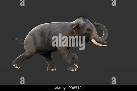 3D-Illustration Elefant isolieren auf schwarzem Hintergrund, Elefant in dunklen mit Freistellungspfaden. - Stockfoto