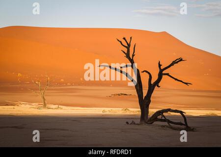 Tote Bäume in Deadvlei, Namib-Naukluft-Nationalpark, Namibia; die Pan hatte einmal Wasser aus Tsauchab Fluss, sondern ein sich änderndes Umfeld führen, um es zu trocknen - Stockfoto