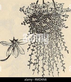 . Jährliche Katalog von Samen und Pflanzen. Baumschulen (Gartenbau), Minnesota, Kataloge, Gemüse, Samen, Kataloge, Blumen, Kataloge. SCHLEGEL FOTTLER SAME KATALOG. 59 LIATRIS. (Blazing Star). Wünschenswert Pflanzen, gut für den Anbau in trockenen Böden angepasst. Die Blüten sind auf langen Stacheln, brillante und frei hergestellt. Winterharte Stauden. Pkt. Pycnostachya. Feine lila. 3ft. . .05 Spicata. Bläulich-rose. lj> 2 ft 05 LIMNANTHES. Douglasi. Auffällige Kalifornien Werk der Verbreitung - ing Gewohnheit, procJucing in großen Mengen seinen süßen Duft, gelbe und weiße Blüten. Robustes Jährliches. 3^ ft. . . .05 LINARIA. Eine sp - Stockfoto