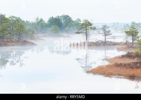 Malerischer Blick auf eine fogy Sumpf in einem Morgen - Stockfoto