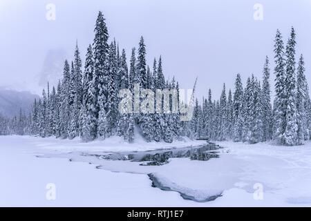 Steg unter schneebedeckten Bäumen am Ufer eines gefrorenen Emerald Lake, Yoho National Park, British Columbia, Kanada, kanadische Rockies - Stockfoto