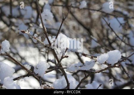 Close up abstrakte Sicht der schneebedeckten Zweigen auf einer laubabwerfenden Busch oder Strauch - Stockfoto